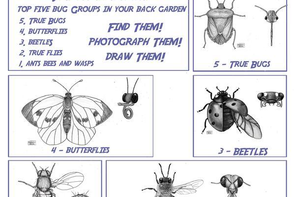 back garden biology handout