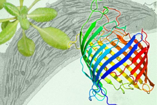 Chloroplast-associated protein degradation