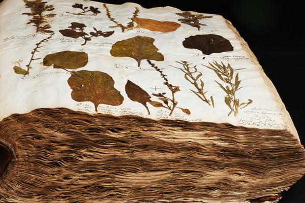 oxford university herbaria specimens